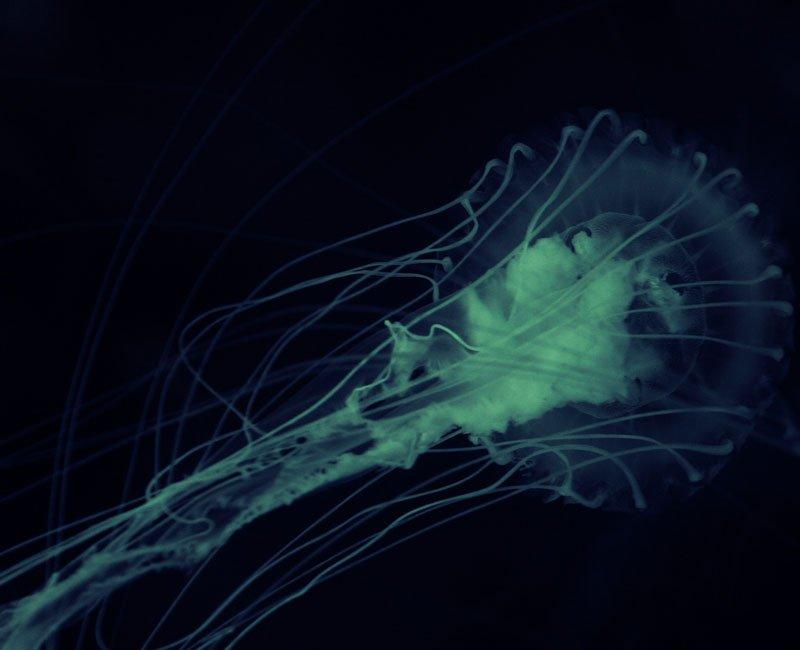 L'amibe, hôte du Mimivirus